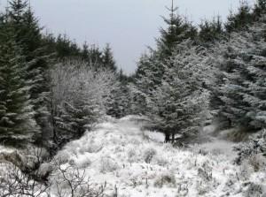 A snowy scene from near Brian Dornans house in Mungaun
